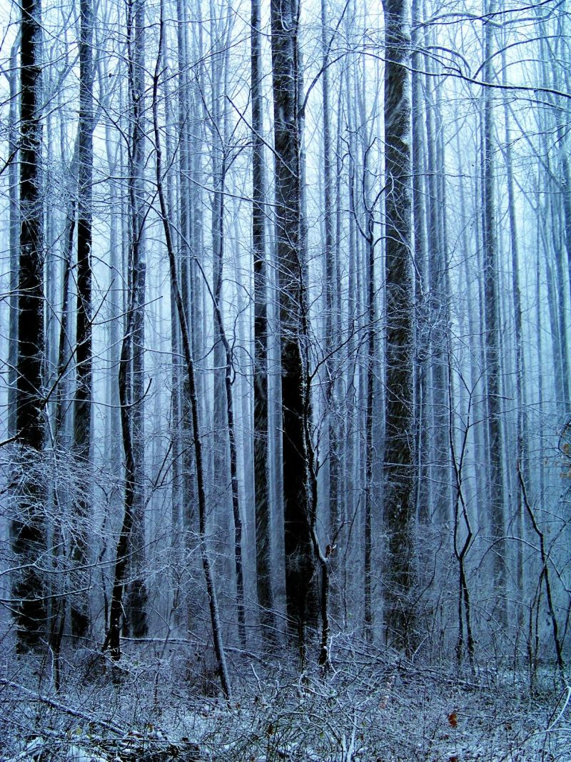 A Dusting in the Woods