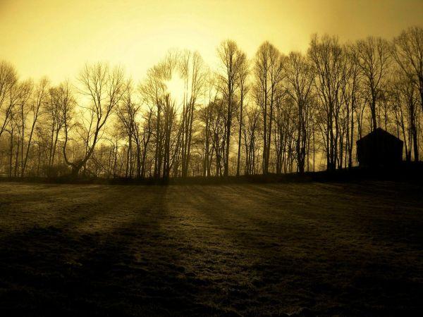 Hillside Morning