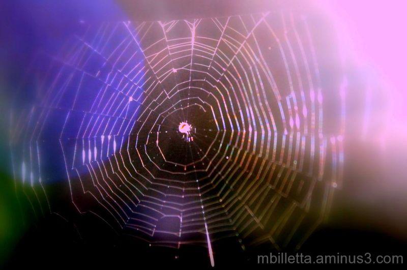 Miracle Web