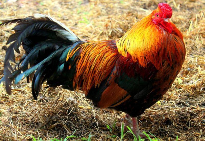 Striking Feathers