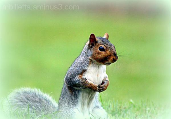 Actin Squirrely