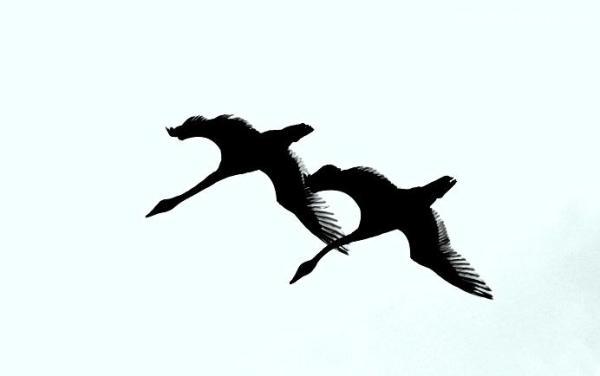 Abstract Tundra Swans