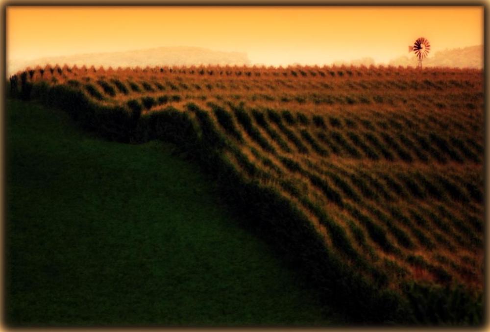August Crops