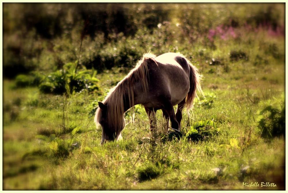Sunkissed Pony