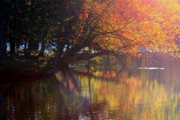 Fall Pastels