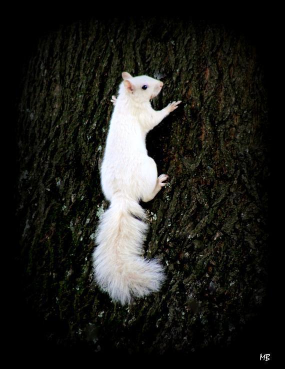 White Squirrel!!