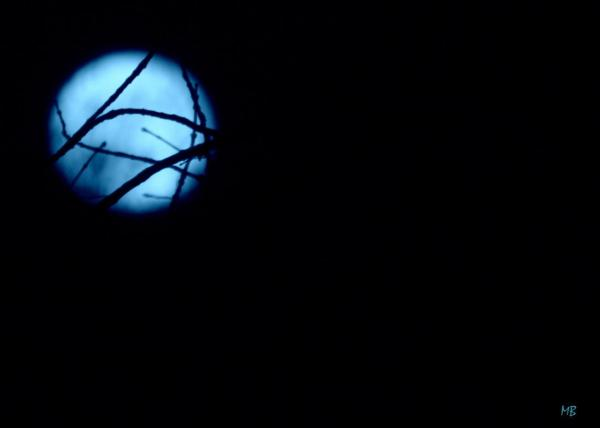 Branches of a Blue Moon