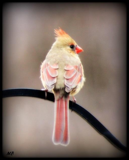 Purdy Birdie