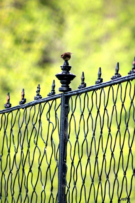 Perched on the Iron Gate