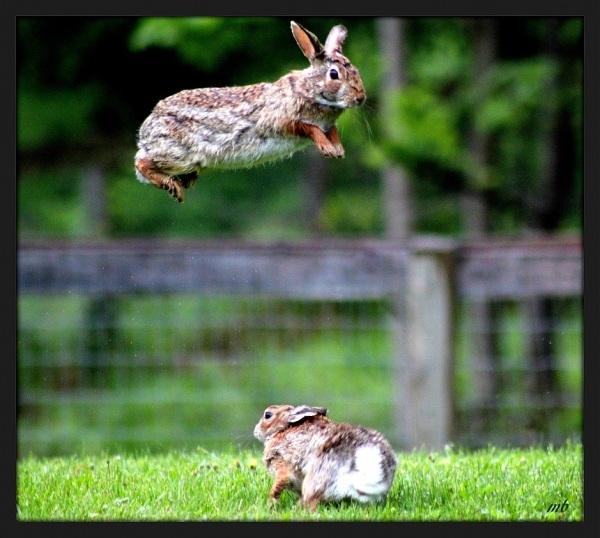 """Spring"" Bunnies"
