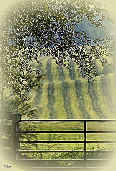 Dreamy Pasture
