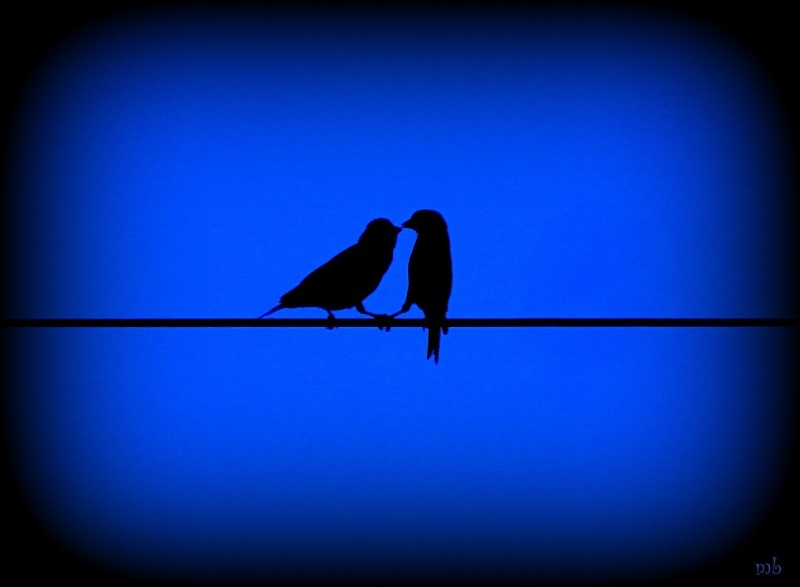 Evening Love Birds?