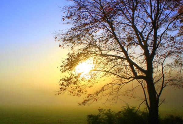 Light Fog