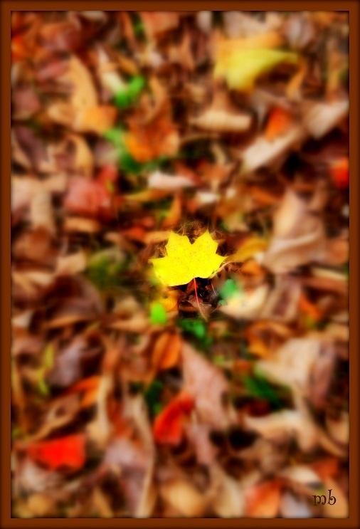 Fall has Fallen