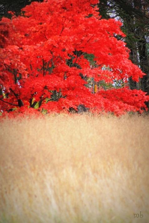 Fall through the field