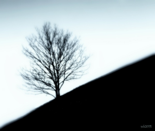 Solitude of Winter