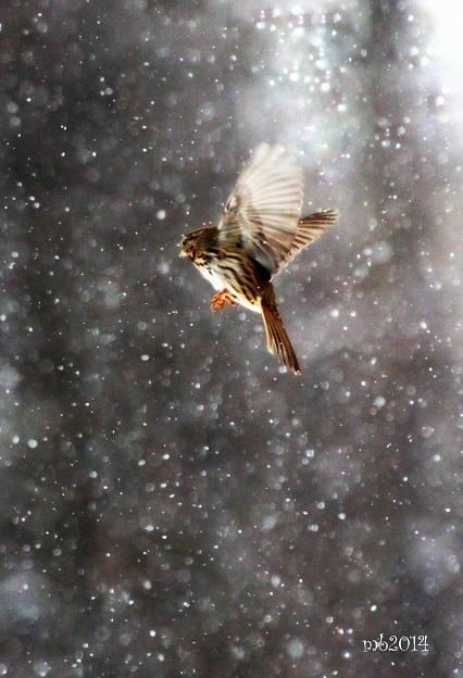 Snow Flight