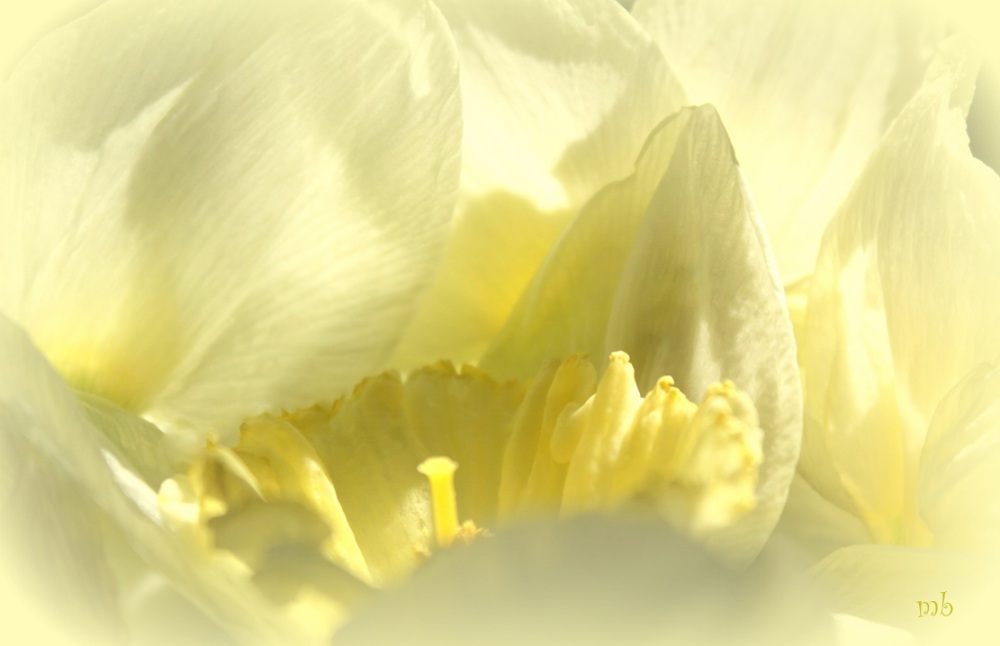 Abstract Daffodils