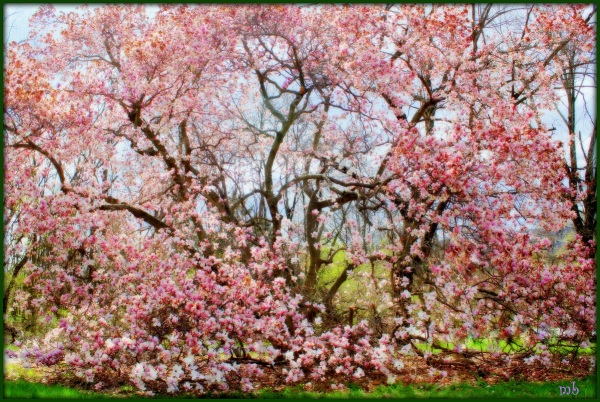 April Bloom