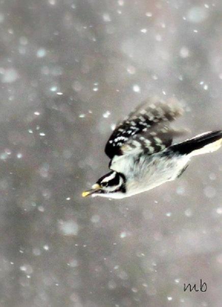 Winter Bird Series 2