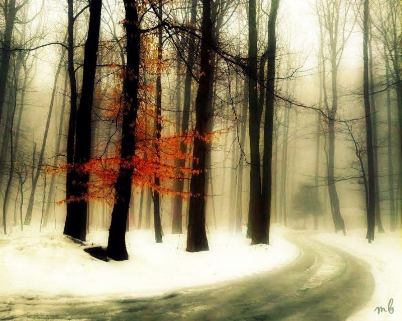 Orange in Winter