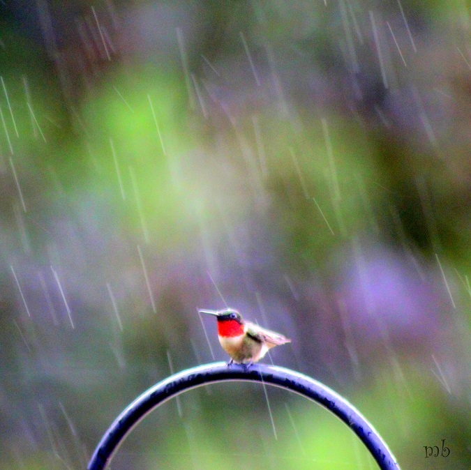 Hummingbird in the Rain
