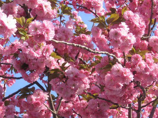 Pink flowers on the trees