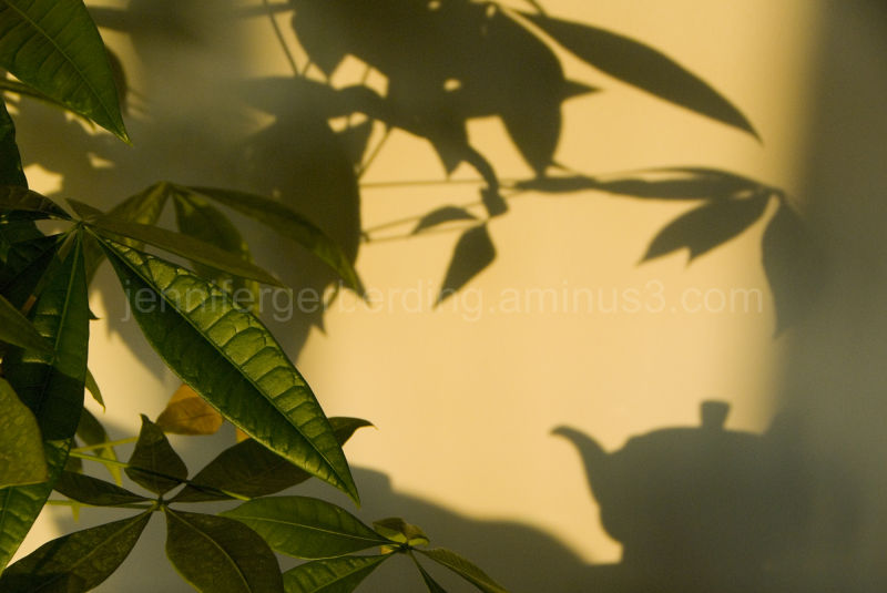 Plant and Tea Shadows