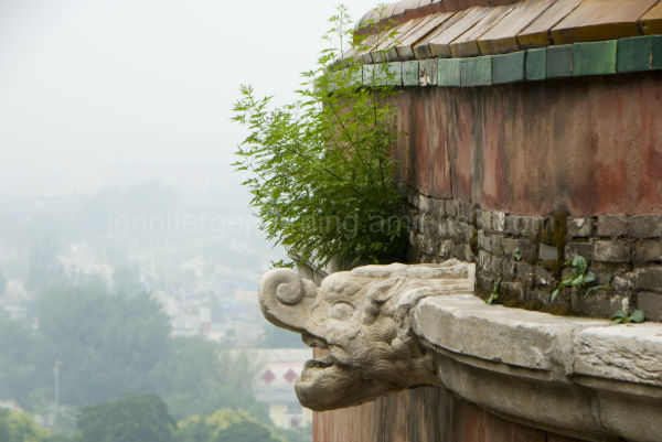 Summer Palace Dragon
