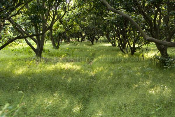 Green Path: Dongguan