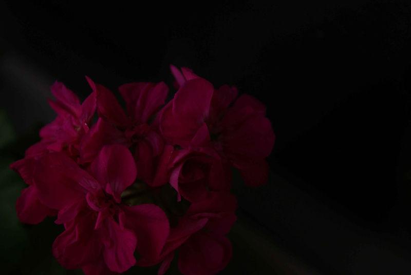Die Blume aus mein Herz