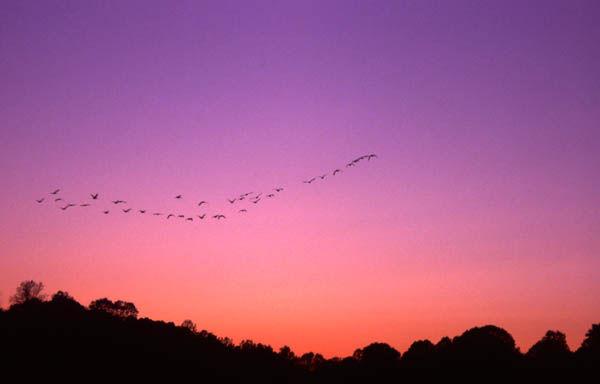 Harmonious Flight