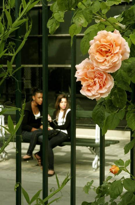 Sous la lumière des jeunes filles en fleurs