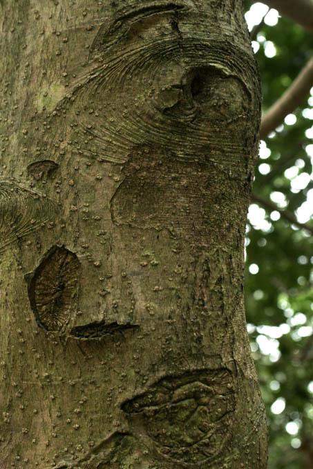 L'arbre figuré