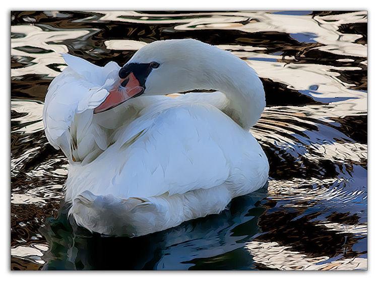 Swan, Hamburg, Germany
