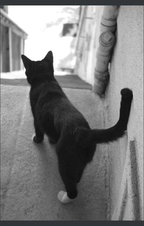 The Neighbor Cat