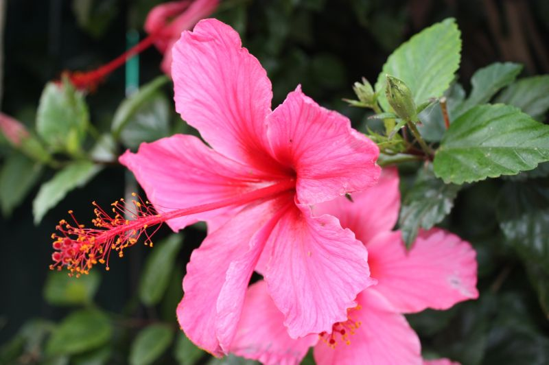 Neighborhood flower