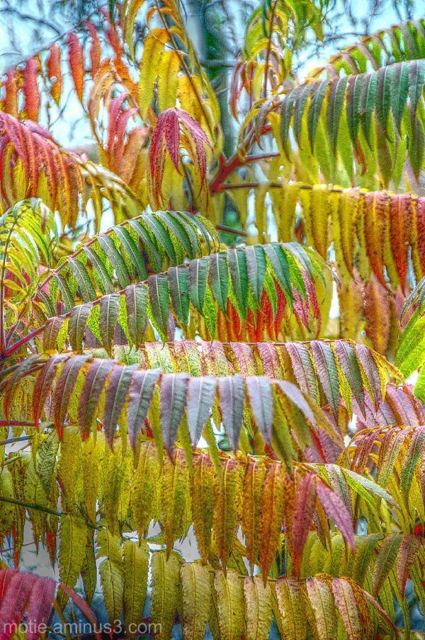flowers leaves nature