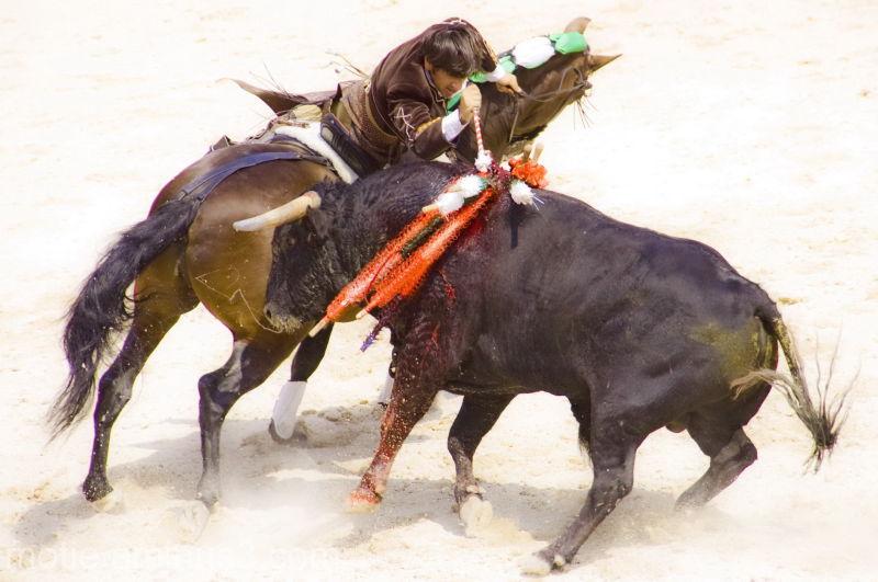 bullfights corrida