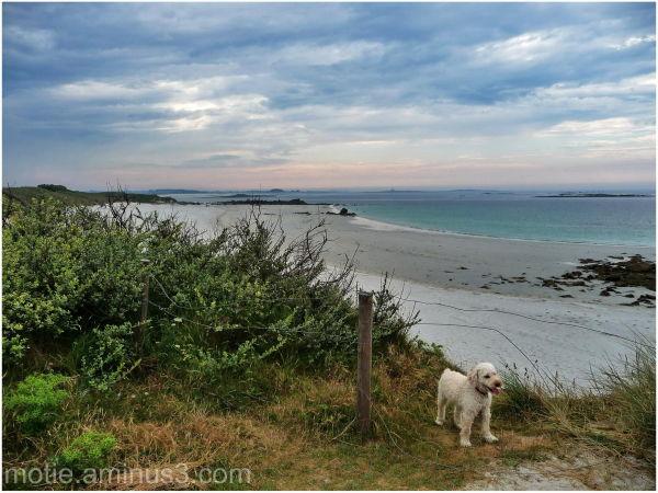 dogs landscapes tréompan brittany