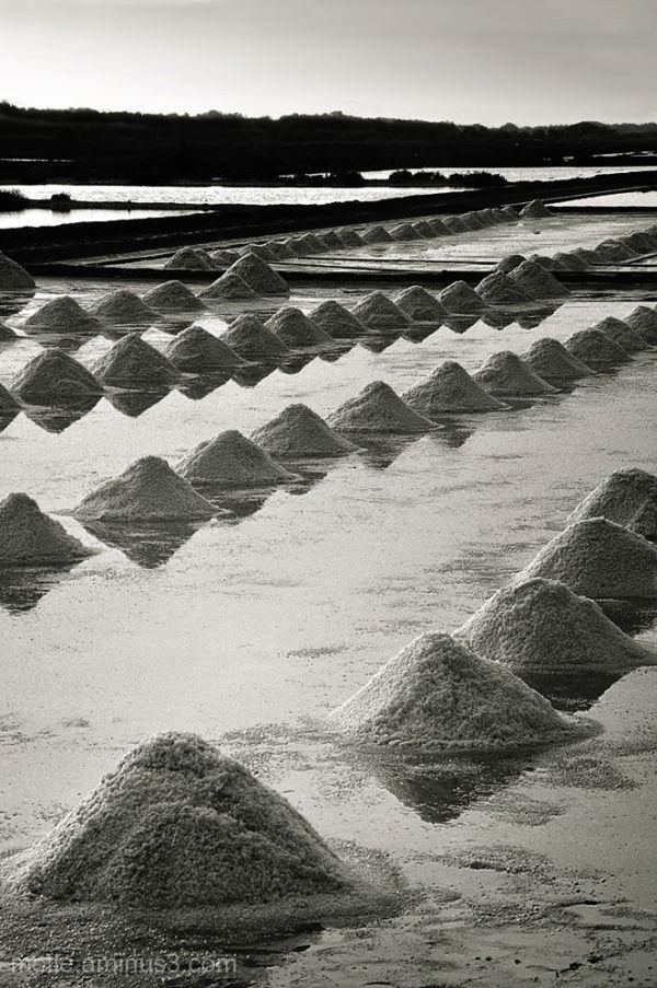 tidal salt