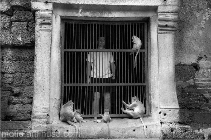 thailand monkeys