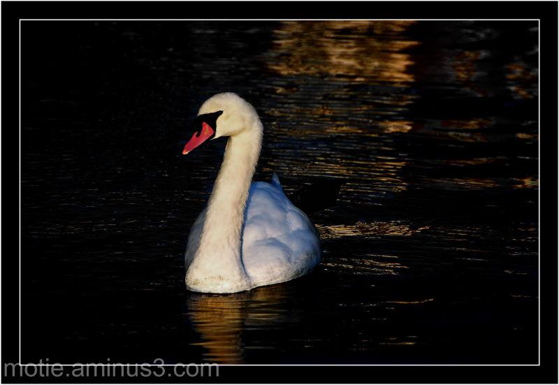 Du Coté de chez swan