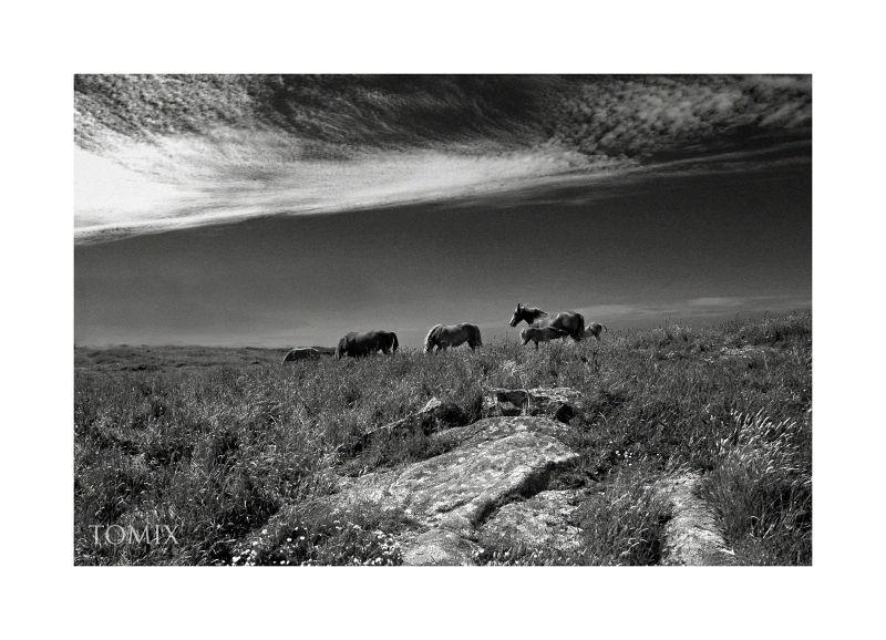 HORSES....Côte des légendes.