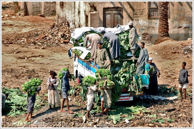 Life on the banks of Nile...Banana connection.