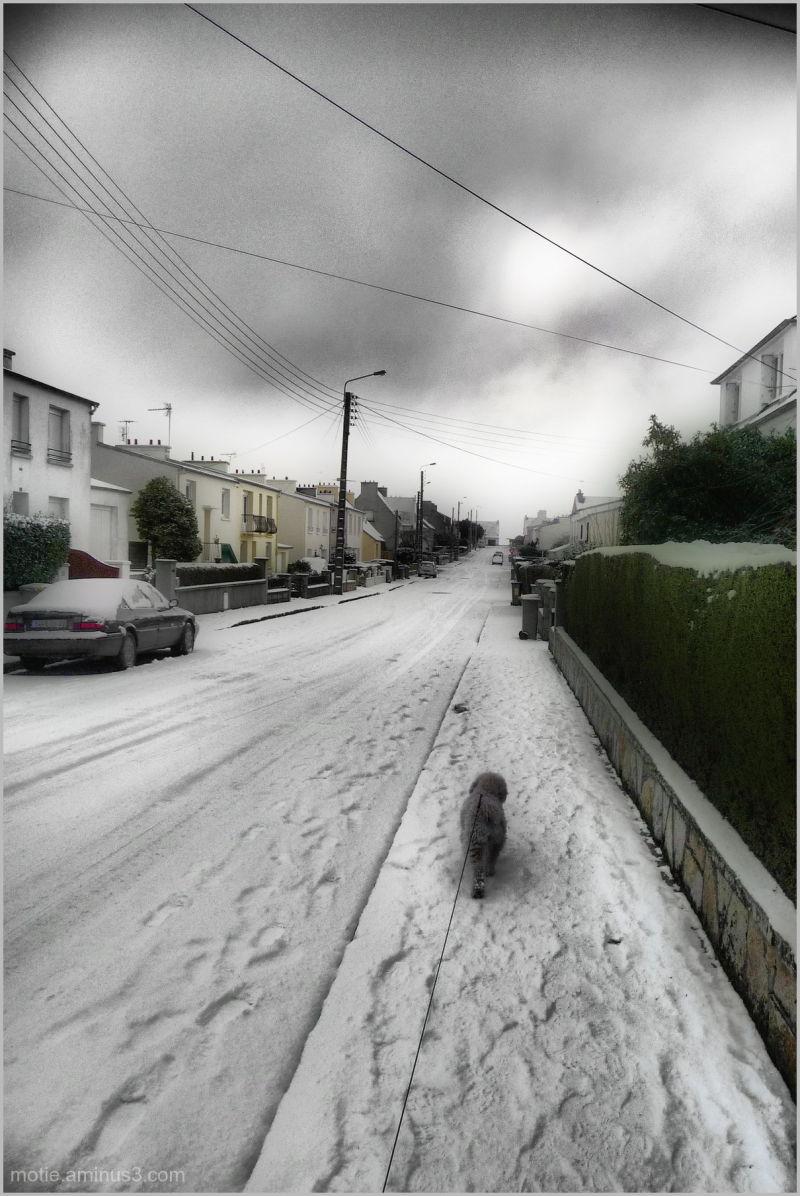 Chien de traineaux/ Dog Sled