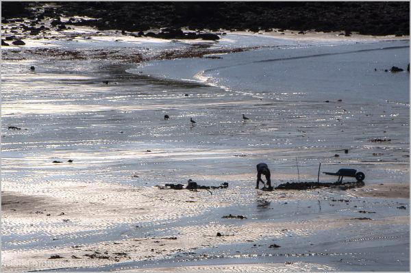 LOW TIDE / La grande marée...