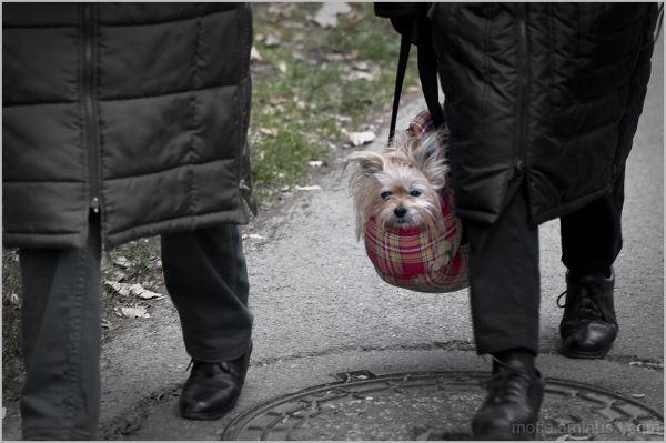 HARD LIFE / une vie de chien!