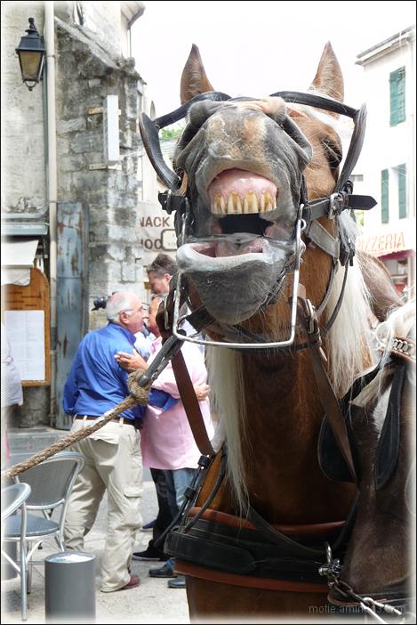LOL!  ou  Le cheval qui rit.