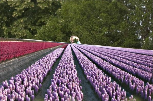 C'est l' Bouquet!    / Flowers